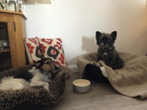 Doggy Day Care - In the living room