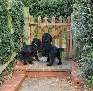 Home dog boarding - waiting at the gate